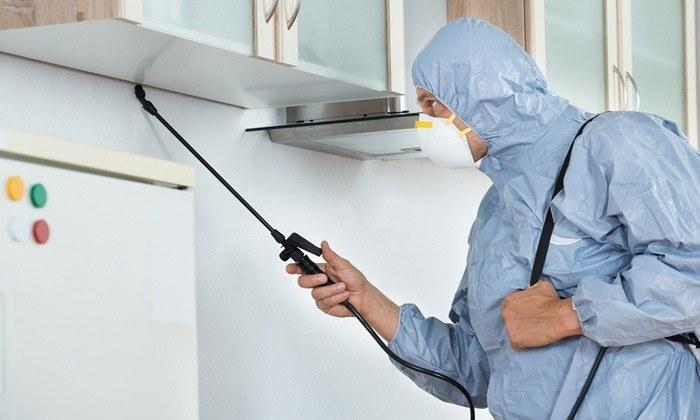 best pest control methods